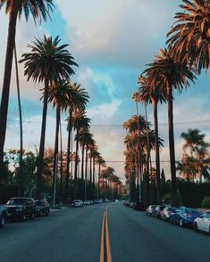 35 Ideas For Travel Usa California Los Angeles Palm Trees Los Angeles Wallpaper, Going To California, California Travel, Malibu California, California Palm Trees, Los Angeles Palm Trees, Tree Wallpaper, Summer Wallpaper, Landscape Photography