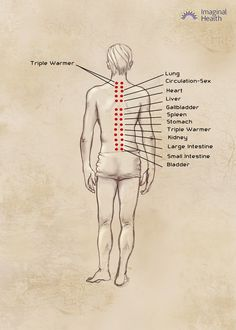 Neurolymphatic points -- back