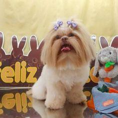 Pet Shop, Shih Tzu, Love Dogs, Animals And Pets, Fluffy Animals, Puppys, Doggies, Softies, Groomsmen