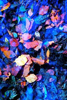 ARTFINDER: Pond Leaf Cloud Reflection 3 by Eddie Fordham - The catalyst for this painting is a fascination with reflections in water, I am often transfixed with the abstract qualities of how the sky and the ground be...