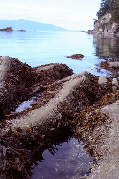 Larrabee State Park in Bellingham, Wa- fun to explore the tidepools