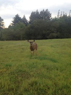 Still amazed by the deer who let you get super close to them. And I still can't get over how beautiful Santa Cruz is no matter what the weather is like.