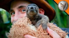 Popular on YouTube - United Kingdom January 27 2017 at 09:00PM Cutest Baby Sloth EVER! via Popular Right Now - United Kingdom By Brave Wilderness via Digitaltv Thaitv  http://ift.tt/2k36uhl
