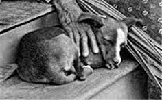 Hawaiian dog, 19th century - Hawaiian Poi Dog - Wikipedia, the free encyclopedia