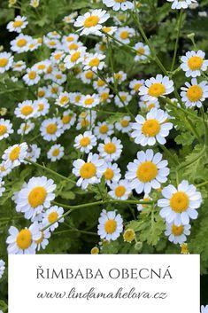 Herbalism, Wedding Ideas, Plants, Honey, Herbal Medicine, Plant, Wedding Ceremony Ideas, Planets