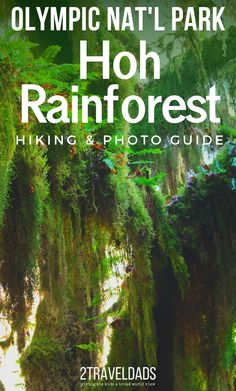 Everything you need to know about exploring the Hoh Rainforest in Olympic National Park. Trail recommendations, wildlife to watch for, and photography tips. Olympic Rainforest, Hiking Spots, Park Trails, Us National Parks, Olympic National Park Camping, Travel Usa, Expedia Travel, Travel Info, Canada Travel