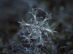Los geométricos copos de nieve de Alexey Kljatov El fotógrafo ruso Alexey Kljatov aisla los copos de nieve del patio trasero de su casa de ...