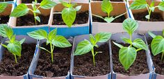 Zahrada v dubnu Flora, Home And Garden, Herbs, Gardening, Vegetables, Health, Tips, Plants, Basket Crafts