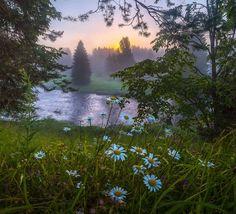 Camomiles at dawn by Фёдор Лашков
