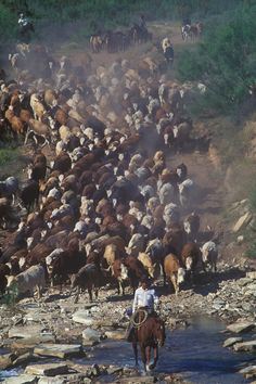 To me there isn't much cooler than an old fashioned cattle drive. I can't say that i would have minded living back when this was the norm. Cant beat the cowboy way of life! Big Sky Country, Country Life, Real Cowboys, Cowboys And Indians, Rodeo Cowboys, Westerns, Cattle Drive, Into The West, Ranch Life