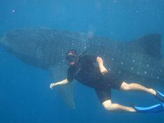 Nadar con el tiburón ballena en isla holbox México una experiencia inolvidable