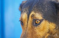 shelter  eyes say it all  pets in frames photography  #facebookpage