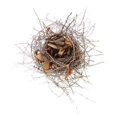 a nest in need of spring cleaning (mary jo hoffman)