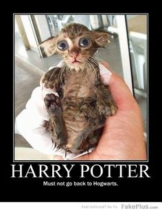 2 things i love!! Sopping wet kitties and HP!
