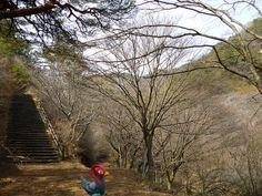 Unfezant in Yamatsuri, Fukushima 50 (Yamatsuriyama Park)