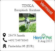 Tinka/Europäisch Kurzhaar/vermisst