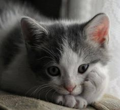 Very interesting post: TOP 36 Cats Pictures. Also dompiсt.сom lot of interesting things on Funny Cat.
