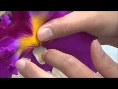 This video will go over the basics on how an orchid is pollinated. We are using a Cattleya orchid for our example. Cattleya Orchid, Orchids Garden, Orchid Care, Houseplants, Succulents, Tropical, Tips, Youtube, Plants