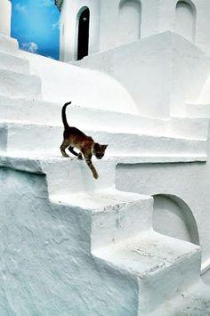 Gato en Santorini ...
