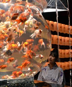 So many fancy goldfish!!!