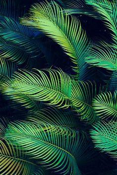 tropical folhagem coqueiro