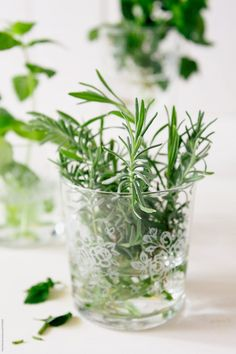 Rosemary in glass by Pixel Stories - Stocksy United Food Brand Logos, Rose Marie, Home Room Design, House Design, Branding, Colorful Garden, Spa Day, Fresh Herbs, Herb Garden