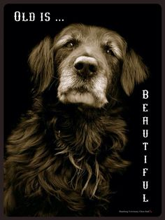 Old is BEAUTIFUL. Follow us on Facebook: Hamburg Veterinary Clinic - Read how to care for your Senior Dog, tips, educational material and of course chuckles sure to make your day.