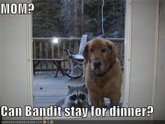 can bandit stay for dinner?