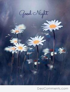 Lovely Good Night, Romantic Good Night, Good Night Messages, Good Night Sweet Dreams, Good Night Moon, Good Morning Good Night, Good Night Quotes, Beautiful Good Night Images, Good Night Love Images