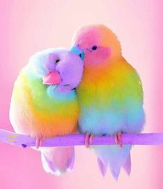 Two love birds. Cute Birds, Pretty Birds, Beautiful Birds, Animals Beautiful, Love Birds Pet, Birds Pics, Bird Pictures, Cute Baby Animals, Animals And Pets