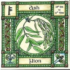 Neo-Druidism - Ash, Ogham name Nion, rules 18th February to 17th March. The cosmic tree, Yggdrasil was the Ash which links the world of men with the realms of spirit and myth, and imparted understanding of the interconnection of all things. Two springs flow from its roots, the sources of Wisdom and of Fate.