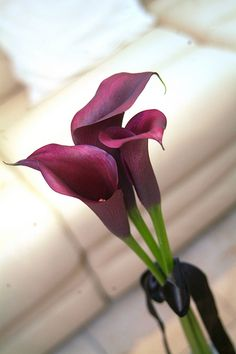 Simple bouquet with ribbon. These are Schwarzwalder calla lilies, but we can do the same with black calla lilies Black Flowers, All Flowers, Amazing Flowers, Beautiful Flowers, Wedding Flowers, Wedding Bouquet, Black Calla Lily, Purple Calla Lilies, Calla Lily Bouquet