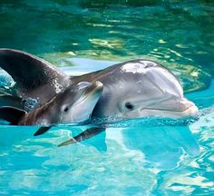 Bottlenose dolphin seen from the Southern Star