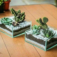 Best 12 Very nice - SkillOfKing.Com - Jardines en miniatura wedding Terrarium succulentes Succulent Arrangements, Cacti And Succulents, Planting Succulents, Cactus Plants, Mini Cactus Garden, Succulent Gardening, Cactus Flower, Terrarium Cactus, Cactus Y Suculentas