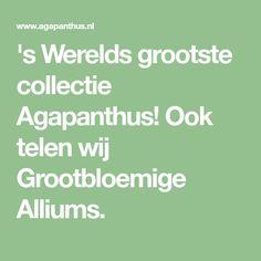 's Werelds grootste collectie Agapanthus! Ook telen wij Grootbloemige Alliums. Agapanthus, Allium