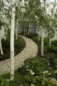 Owned and managed by brother and sister team, Julian & Sara Ronchi - Julian Ronchi Garden Design & Nursery specialises in fine residential and commercial landscape design. Back Gardens, Outdoor Gardens, Woodland Garden, Garden Cottage, White Gardens, Coastal Gardens, Garden Trees, Parcs, Garden Spaces