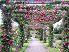 Royal Botanical Gardens @ Kew, London