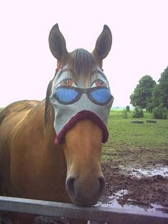 horse humor; Image ONLY @Stephanie Close Close Witkowski
