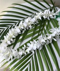 Kukui Nut Lei Fruit Gifts, Gift Baskets, Special Gifts, Anniversary Gifts, Hawaiian, Birthday Gifts, At Least, Tropical, Flowers