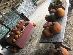 Apple picking at Riley's Farm - behgopa California Getaways, Cherry Picking, Road Trips, Summer Time, Crisp, About Me Blog, Korean, Pumpkin, Apple