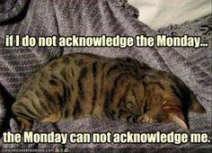 The Monday.