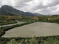 Menehune Fishpond by Lihue.  Totally gonna go back here... Someday