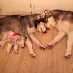 Love is everything!!! - aww