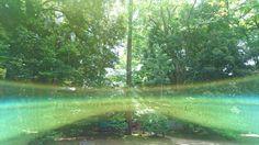 朝一に見たカラスから大宮氷川神社への導き✨✨✨|孔雀と太陽の虹色の旅✨✨