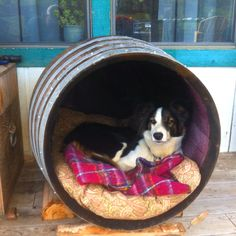Wine barrel dog house for kaya