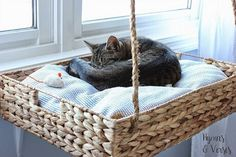 5 DIY projects to keep your indoor cat happy and healthy. playground outdoo… 5 DIY projects to keep your indoor cat happy and healthy. playground outdoor diy 5 DIY Projects to Keep Your Indoor Cat Happy and Healthy Cat Window Perch, Cat Perch, Cat Window Shelf, Diy Hanging, Hanging Baskets, Wicker Baskets, Diy Pour Chien, Diy Cat Shelves, Floating Cat Shelves