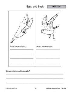 Mammals: Bats by Evan-Moor Educational Publishers Spring Poems For Kids, Picture Cards, School Life, Mammals, Diagram, Birds, Activities, Illustration, Bird