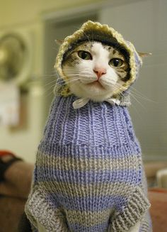 Cat wearing a sweater...so mean!