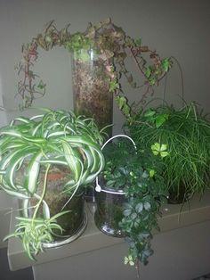 Planten Plants Grown In Water, Pots, Water Garden, Ceilings, Indoor Plants, Glass Vase, Gardening, Beautiful, Home Decor