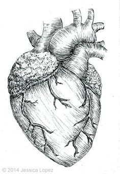 Heart   Jessica Lopez